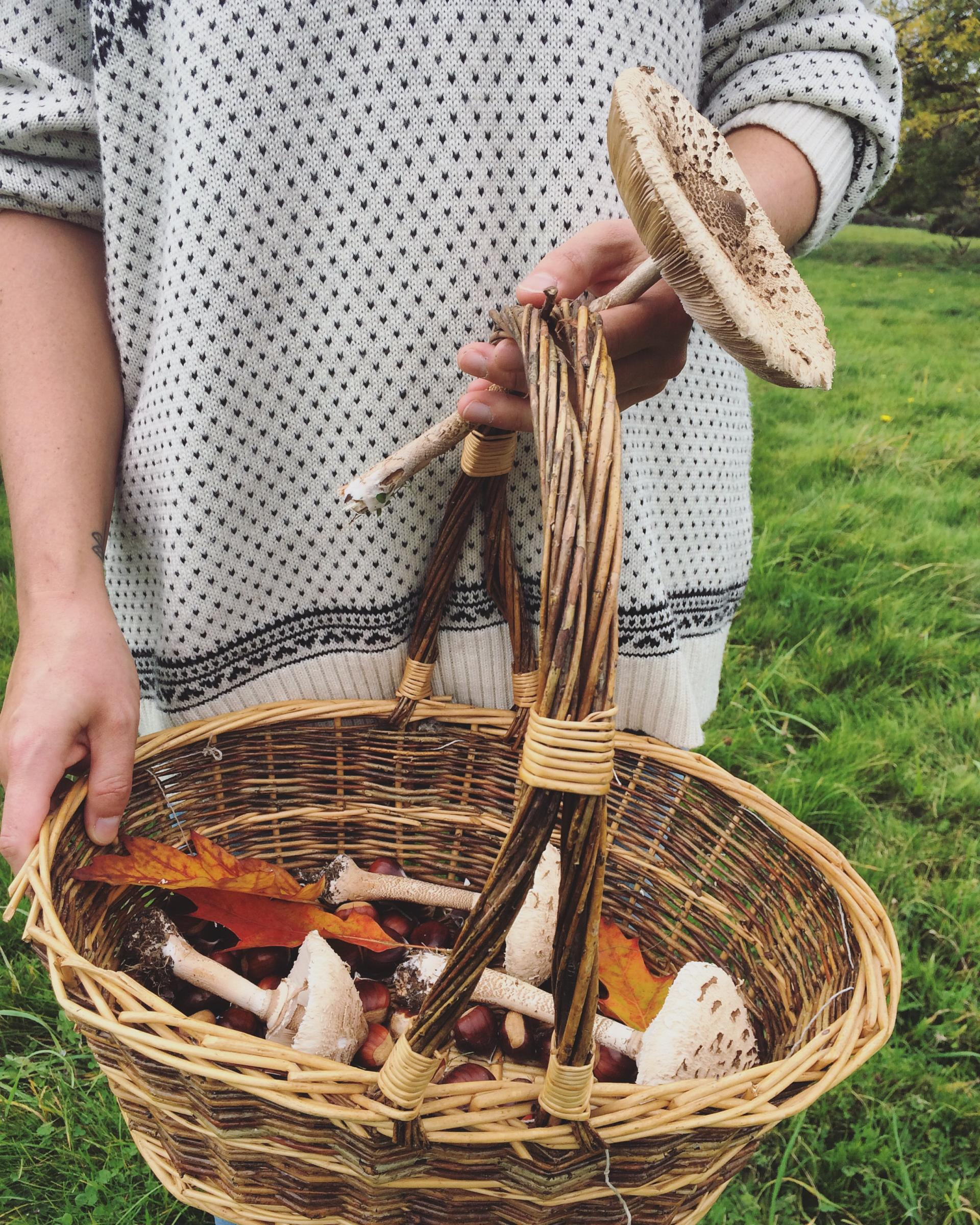 Foraging in autumn in Britain