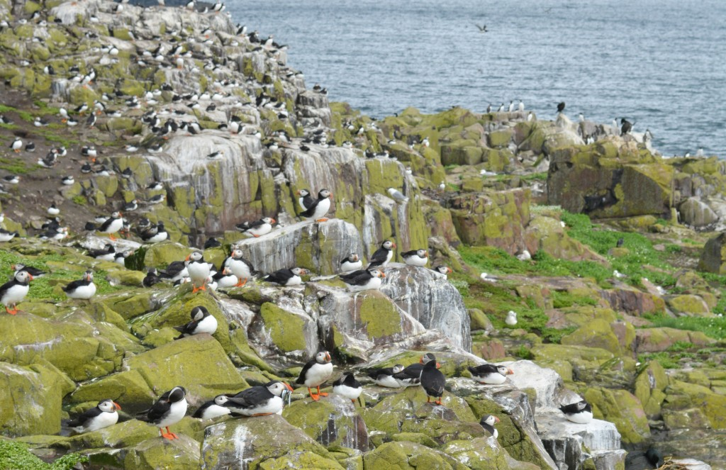 visiting the Farne Islands, Northumberland