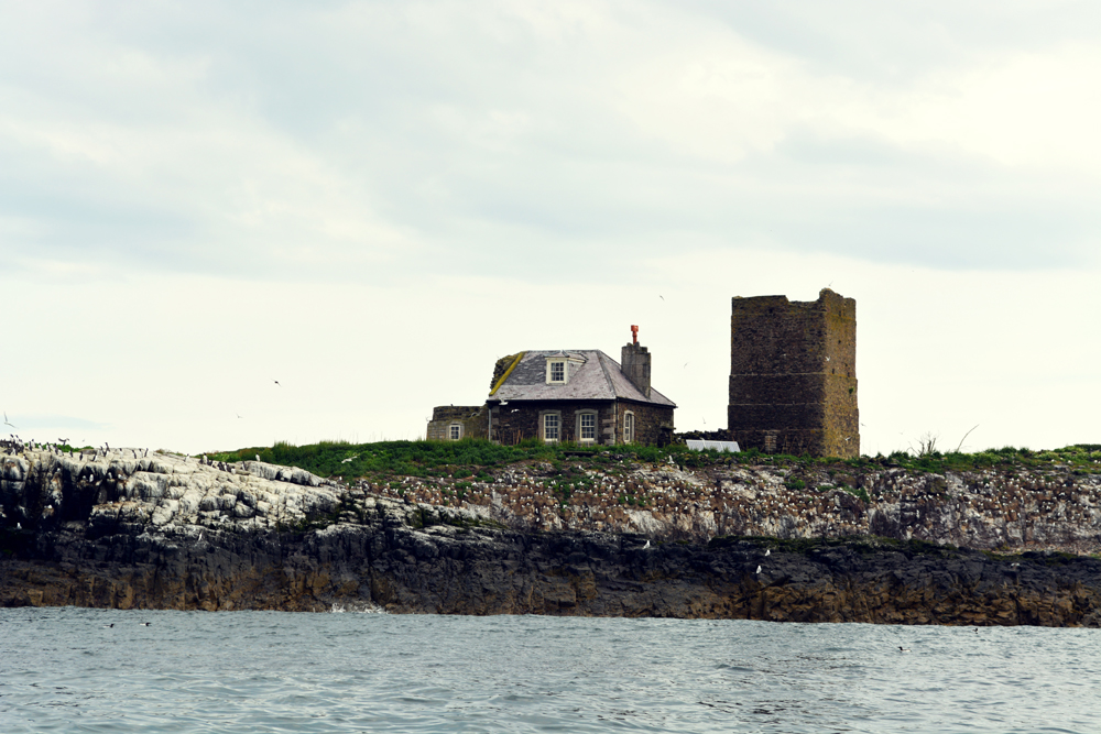 visit the Farne Islands, Northumberland