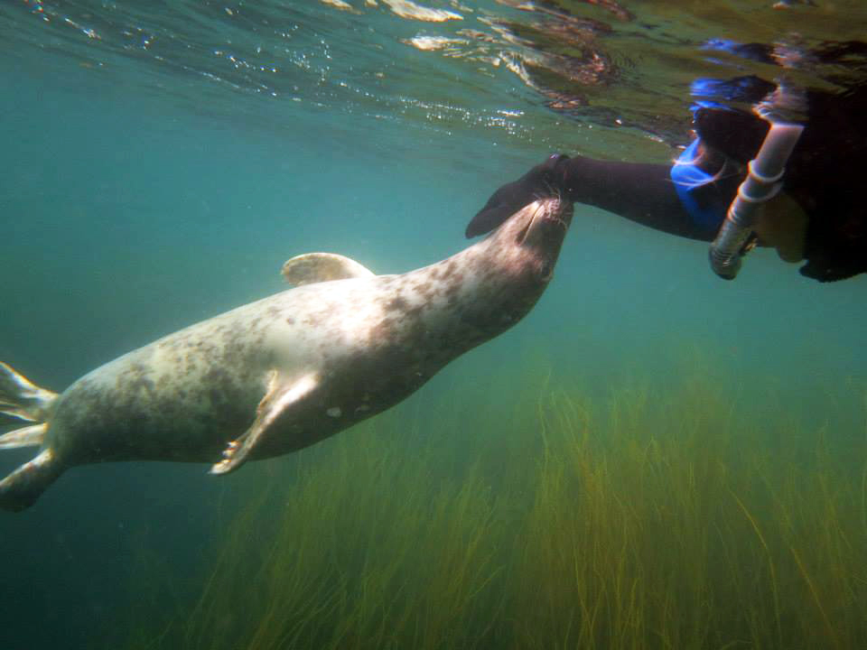 Seal snorkelling on Scilly with Jeep and #Renegadeswanted