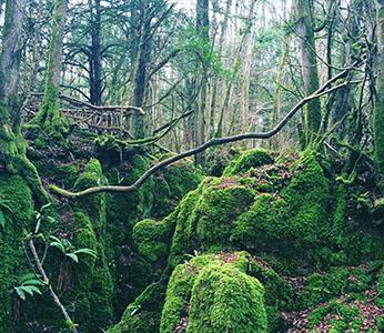 outdoor guide to the Forest of Dean