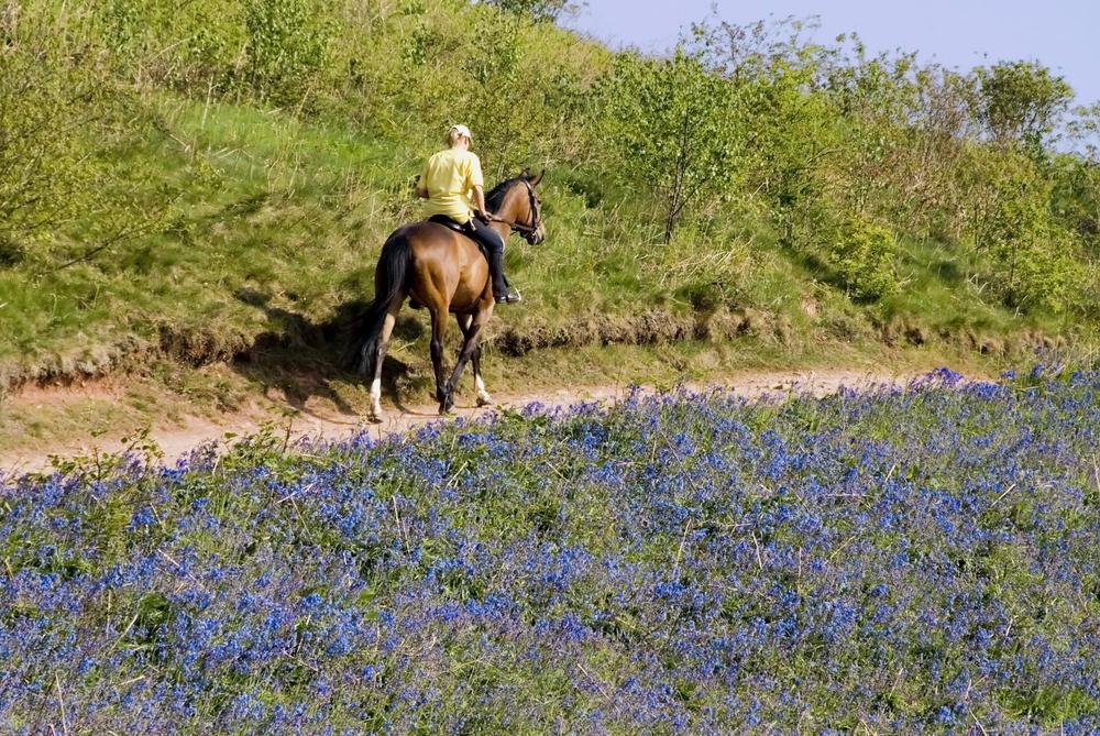 The horse rider's bucket list: five must-ride UK trails